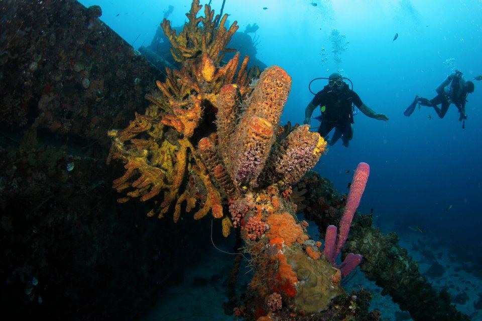 curso-de-mergulho-em-brasília-sub-img-brasilia-sub